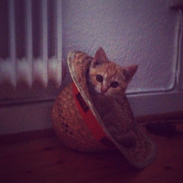 Tigerlou , lovely Memories , Cat Hello World