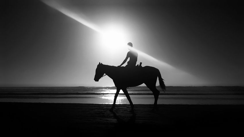 Silhouette One Man Only One Person Adult One Animal Only Men Adults Only Mammal People Animal Themes Outdoors Day Taghazout Beach Beach Horse Horse Photography  Horse Riding EyeEmNewHere Be. Ready. Black And White Friday Step It Up One Step Forward