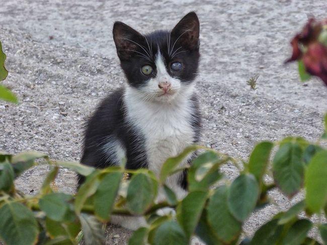 Patmos Patmos Island Patmos Island Greece Dodecanese Greece GREECE ♥♥ Cats Cat Cat♡ Cat Lovers Cats Of Greece Blackandwhite Black And White Black & White Black And White Cat Black And White Cats