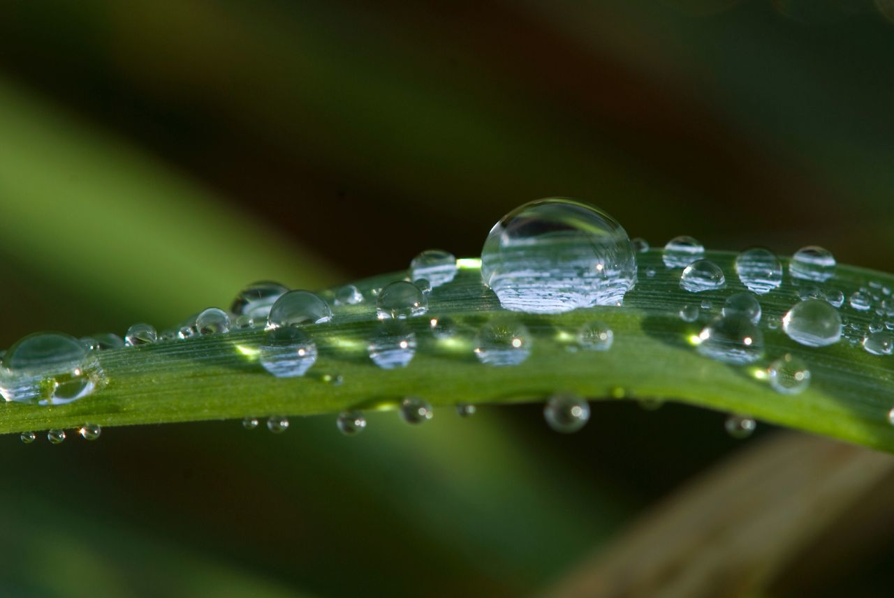 drop, water, wet, freshness, green color, nature, purity, leaf, selective focus, droplet, close-up, raindrop, fragility, beauty in nature, growth, no people, day, outdoors, plant