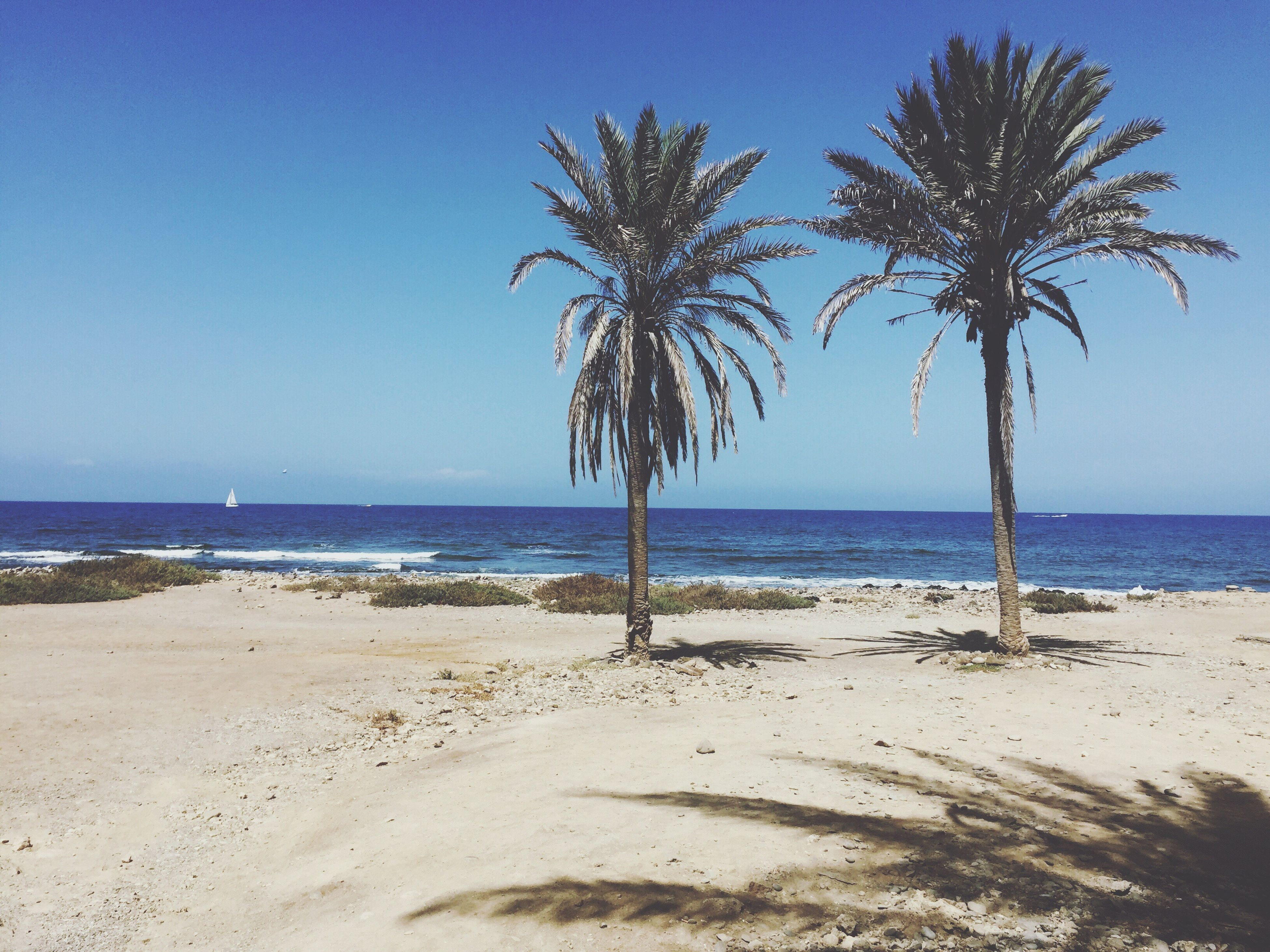 palm tree, sea, beach, horizon over water, tranquil scene, sand, water, tranquility, blue, growth, clear sky, scenics, tree, shore, nature, beauty in nature, solitude, tree trunk, outdoors, calm, day, sky, tall - high, remote, non-urban scene, tourism, no people, vacations, growing, seascape, majestic, green color