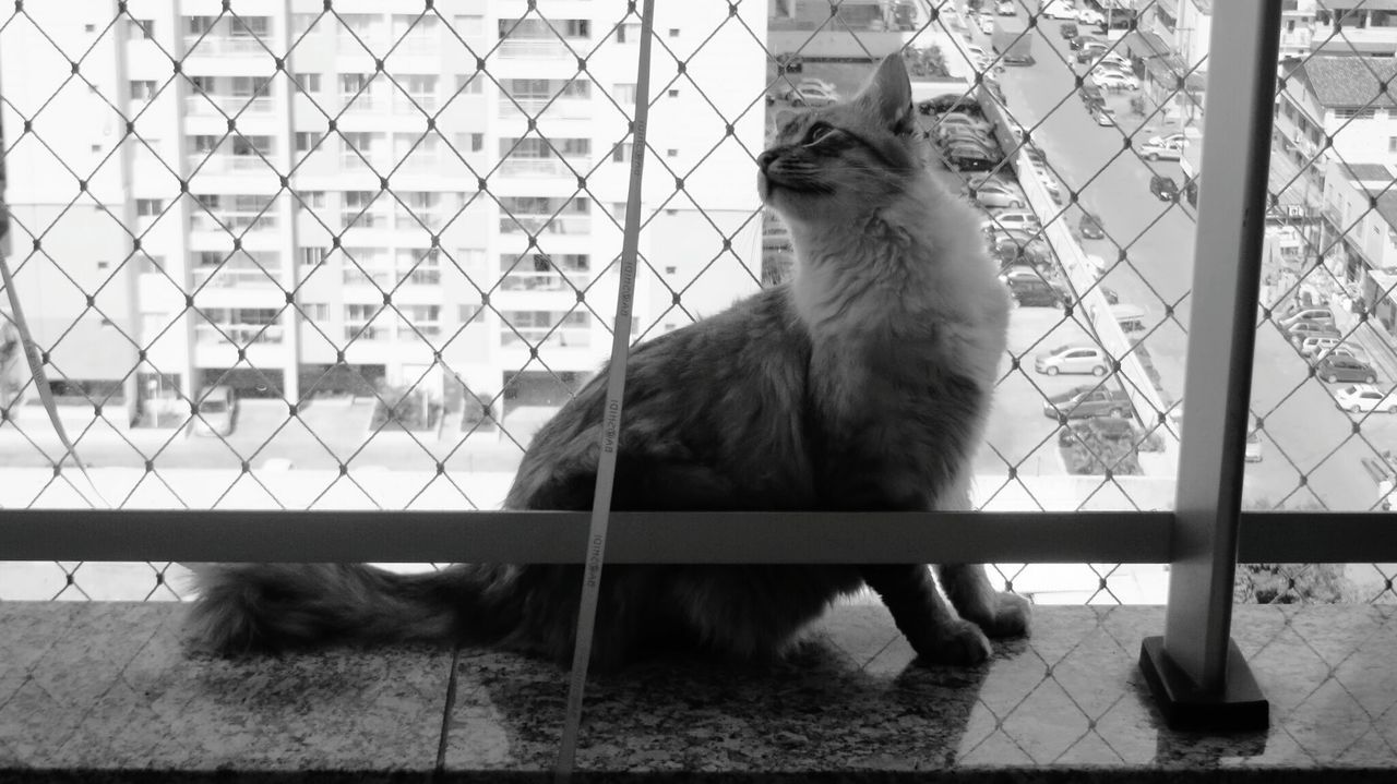 Safety net, I'm glad you're here. Pets Living Dangerously Hello World Black & White Cats Cat Balcony Protection Protecting Where We Play Cute Cats