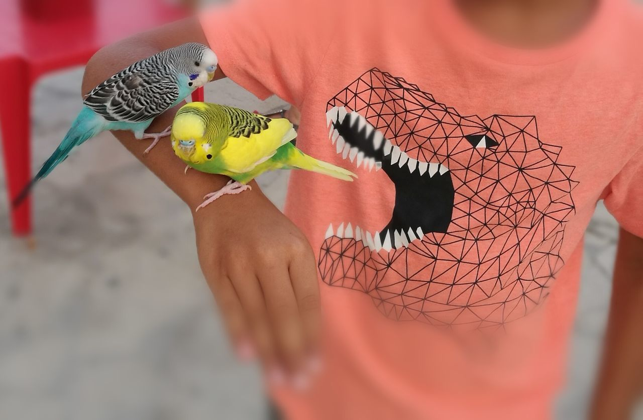 real people, one person, animal representation, toy, indoors, human hand, holding, one animal, lifestyles, human body part, leisure activity, stuffed toy, childhood, animal wildlife, day, animal themes, close-up, bird, mammal