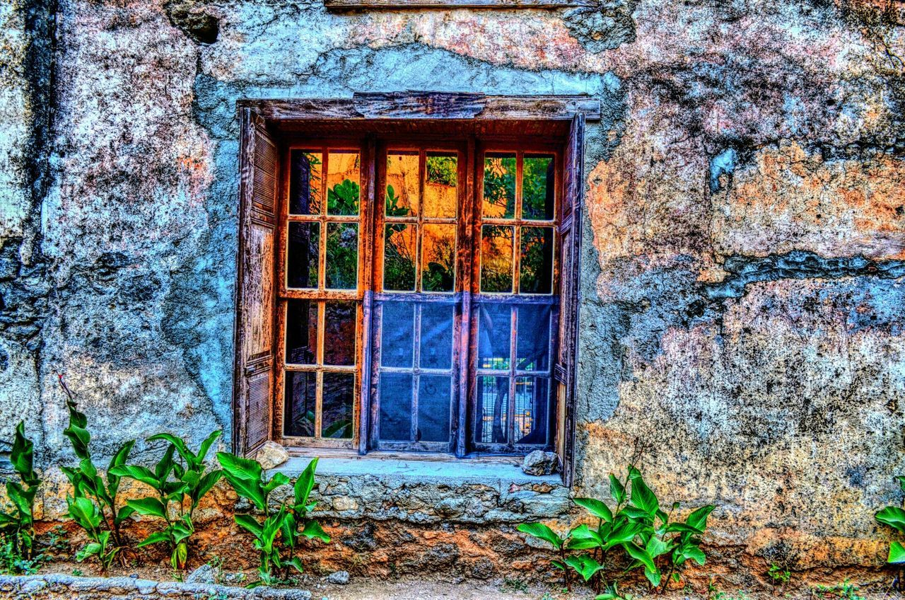 window, architecture, door, built structure, plant, building exterior, day, no people, abandoned, house, growth, outdoors, green color, leaf, nature, open door, close-up