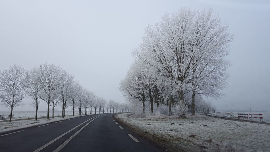 Transportation Tree Sky Road No People Growth Outdoors Day Nature Snowing Whitefrost Nature Beauty In Nature Transportation Commuting Road Snow ❄ Travel Snowy Snow Adapted To The City
