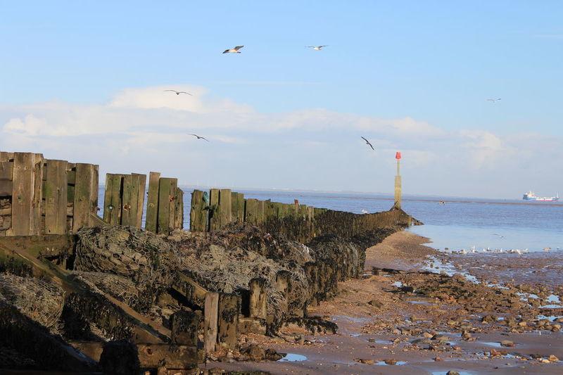 Seagulls in Cleethorpes Sea Sea Wall Seagulls