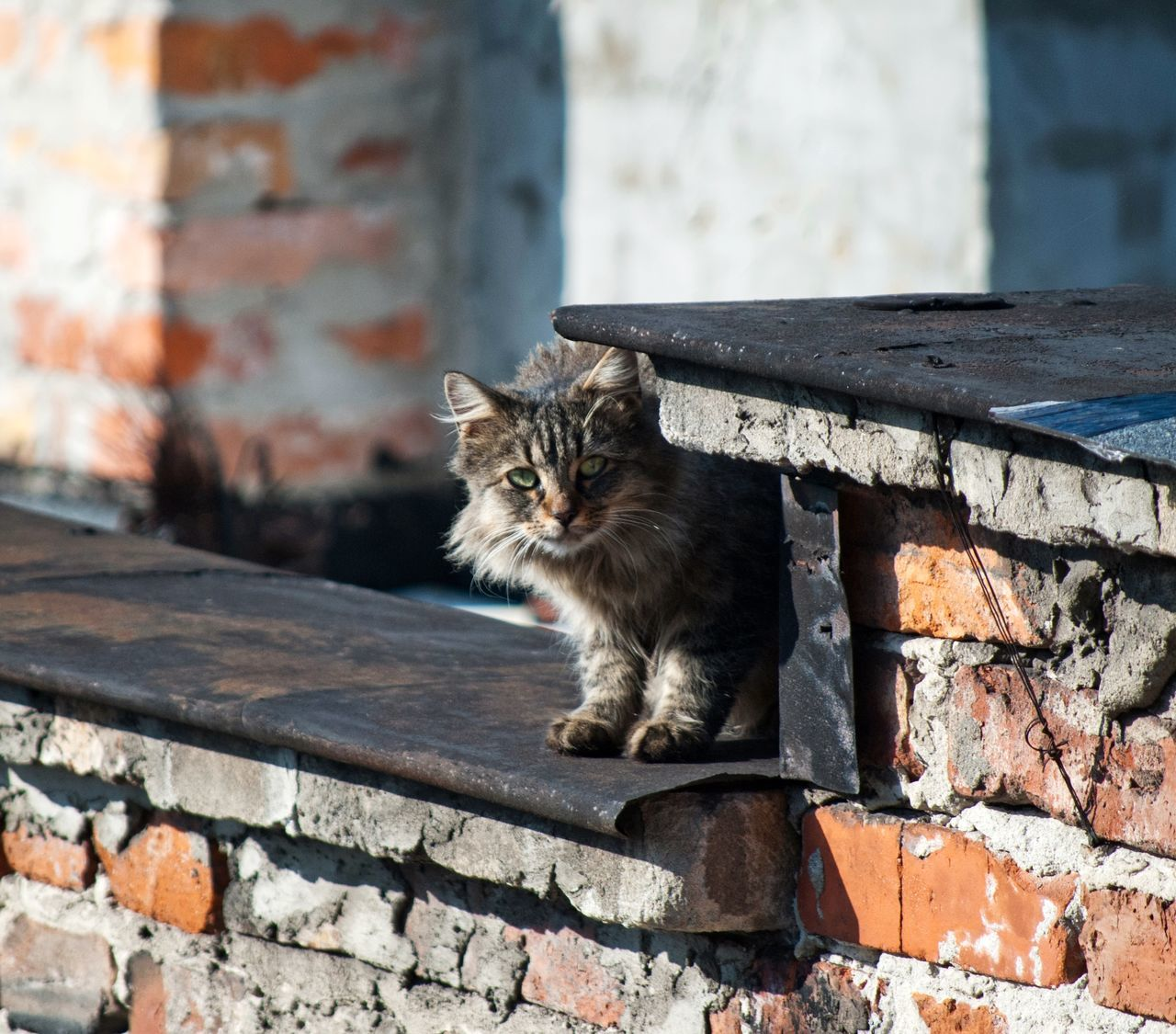 Abandoned Cat Alone Cat Animal Architecture Beutiful Cat Cat Cat Lovers Cat Outdoors Cat Photography Cats Cats Eye Cats Of EyeEm Cat♡ Citty Cat Citty Life City Cat City Life Homeless Cats Hunting Cat Live Lonley Lonley Cat Nature Roof Tile Sad & Lonely