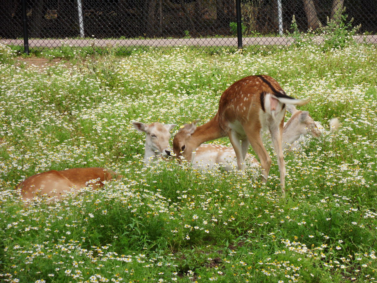 animal themes, grass, domestic animals, no people, mammal, nature, day, one animal, livestock, growth, outdoors