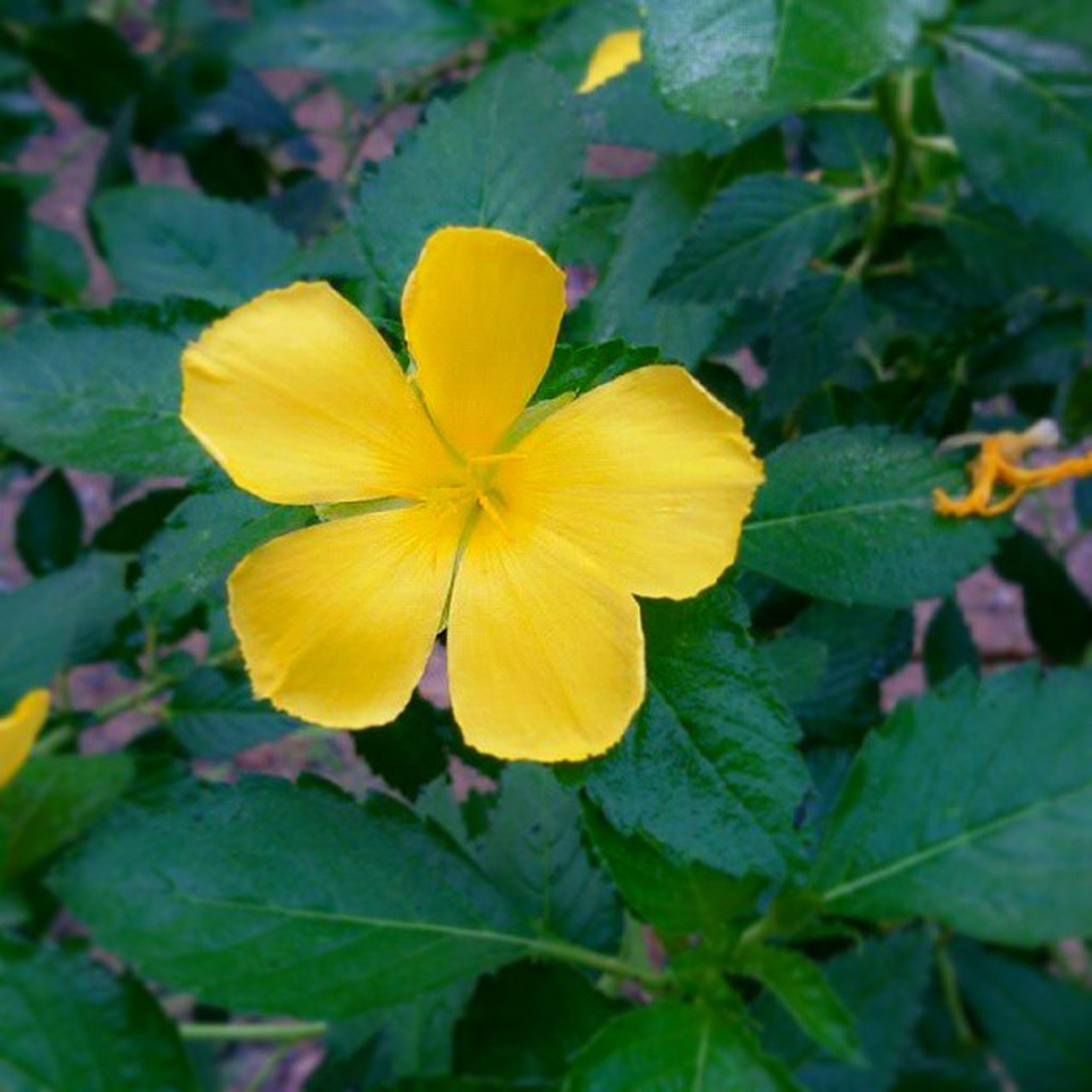 flower, petal, freshness, fragility, flower head, growth, leaf, beauty in nature, yellow, close-up, blooming, nature, plant, focus on foreground, single flower, stamen, in bloom, high angle view, pollen, park - man made space