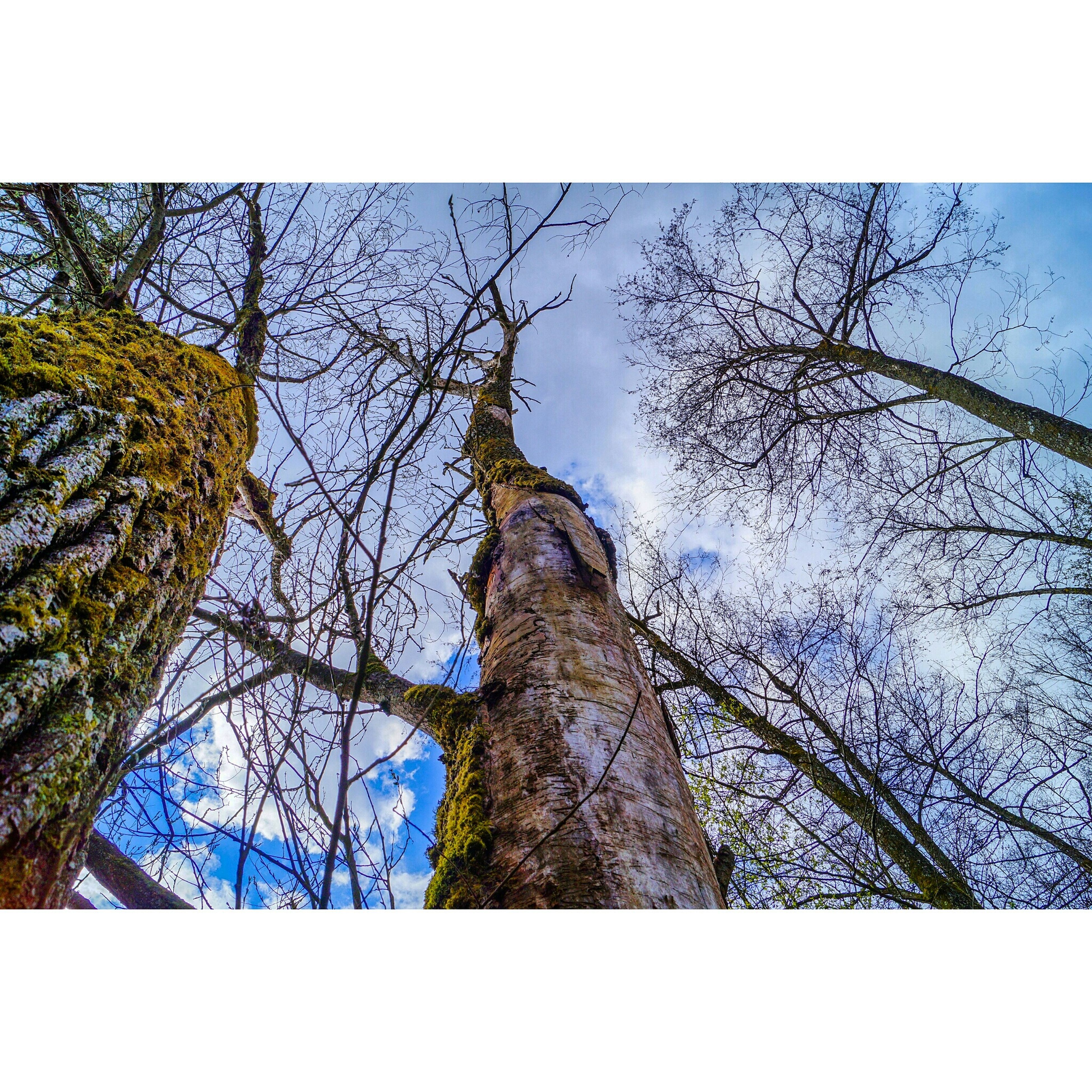 tree, low angle view, branch, tree trunk, transfer print, bare tree, sky, nature, tranquility, auto post production filter, clear sky, growth, blue, beauty in nature, day, no people, outdoors, silhouette, scenics, tranquil scene