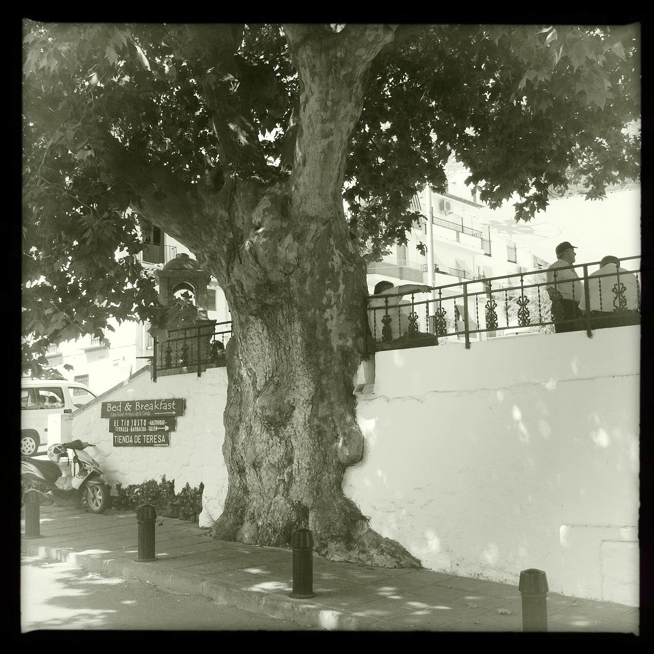 Tree in the wall Tree Outdoors Quiet Town White Town Andalucia Spain Adapted To The City