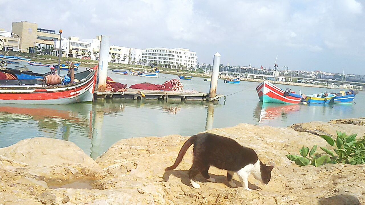 Water Cloud - Sky Gondola - Traditional Boat Day Cats Of EyeEm Cat♡ One Animal Bouregregriver Bouregreg Marina Morocco WeekOnEyeEm EyeEm Gallery Eyeemvision