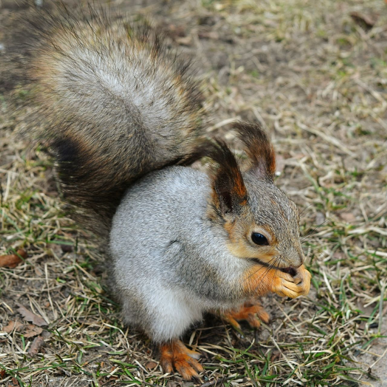 Taking Photos Spring Photography Nature Photography Beauty In Nature Squirrel Elagin Island Park Eating Enjoying Life