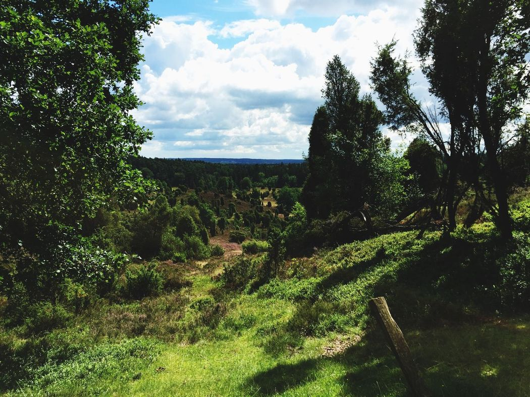 Totengrund Heide Scenics Nature Beauty In Nature Landscape Outdoors No People