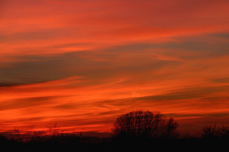 Sunset today 20170126 Beautiful Sunset Beautiful Sunset♥♥Good Evening EyeEm Beauty In Nature Bright Colors Bright Colors In Darkness Cloud - Sky Landscape Natural Phenomenon Nature No People Orange Color Outdoors Scenics Silhouette Sky Sunset Tranquil Scene Tranquility Tree