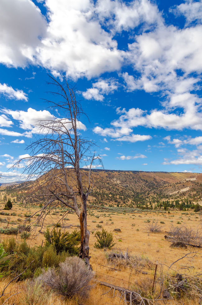 Dry desert landscape with a dead tree in the foreground and a dramatic blue sky in Central Oregon Bend Central Oregon Colorful Countryside Deschutes Deschutesriver  Desert Dry Forest Grass Landscape Nature Oregon Outdoors Park Rural Rushing Tourism Travel Tree United States View Water Wild Wood