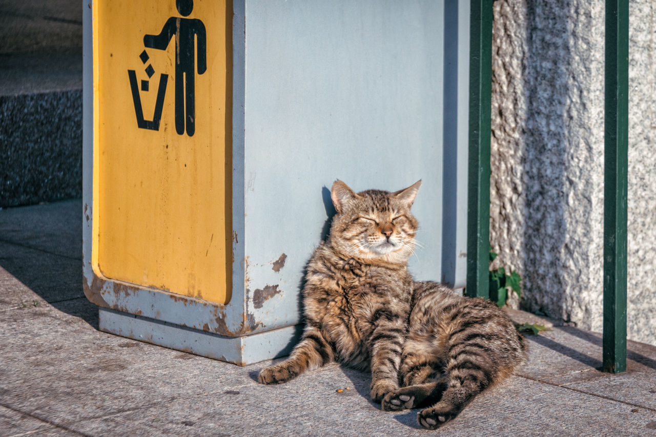 easy life... Animal Themes Day Feline Mammal No People One Animal Outdoors Stray Cat Sunbathing Trash Can