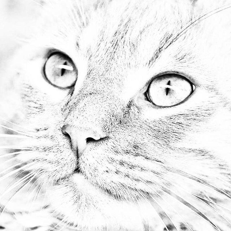 So cute cat 🐱 Nikonfr Coeurpostal Igersfrance Animal Chat Instacat Lolcat Cute B &w N &b Eyes Blackandwhite Bnw_fanatics Commcam Picsoftheday Lesphotographes