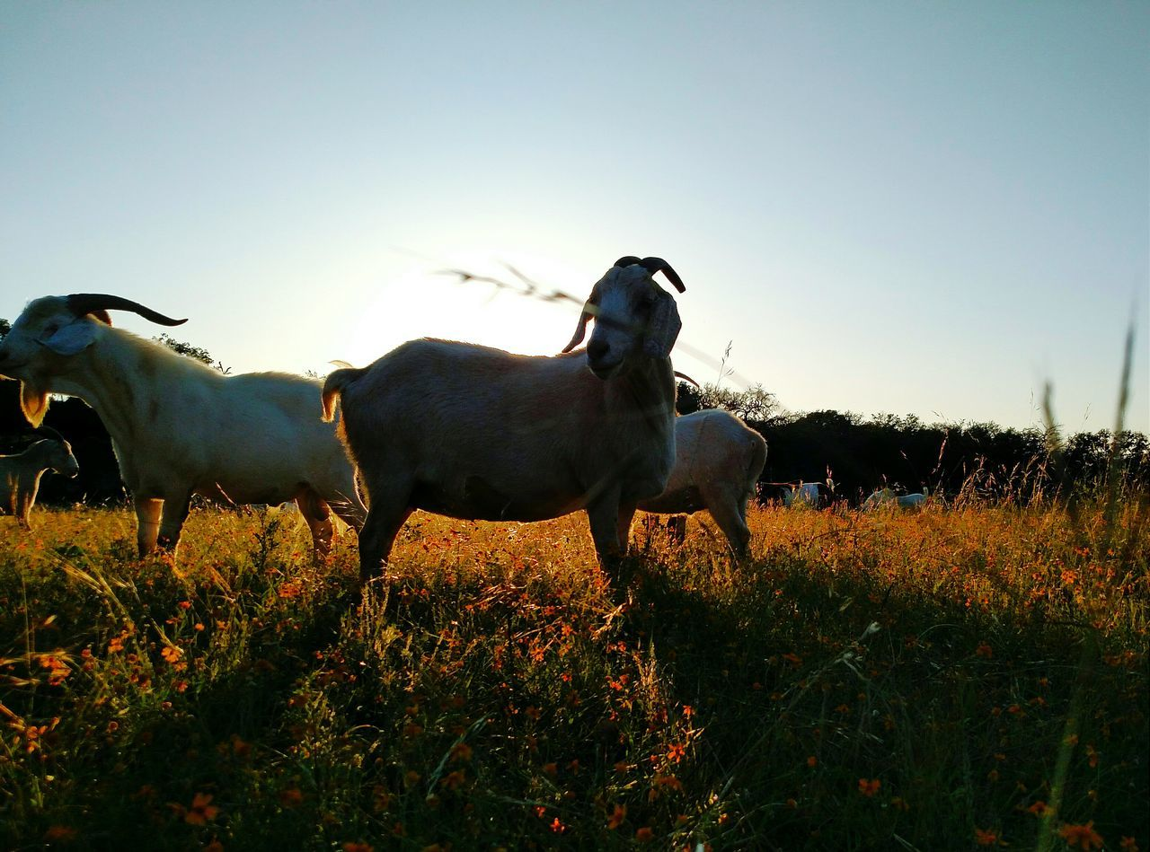 Color Portrait Goat What I Value Portrait Landscape Light And Shadow Hugging A Tree Sky And Clouds Nature Love
