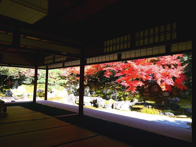 Relaxing 紅葉 京都Japan 圓徳院