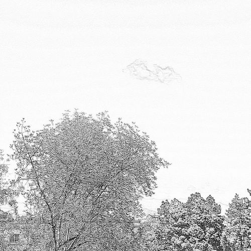 Christophography White Trees Cloud