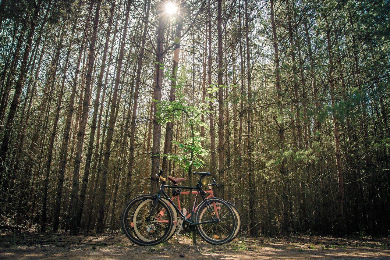 Bamboo - Plant Bamboo Grove Beauty In Nature Bicycle Bike Day Forest Forrest Growth Mountain Bike Nature No People Outdoors Pedal Riding Sunset Tree Trees Wideangel