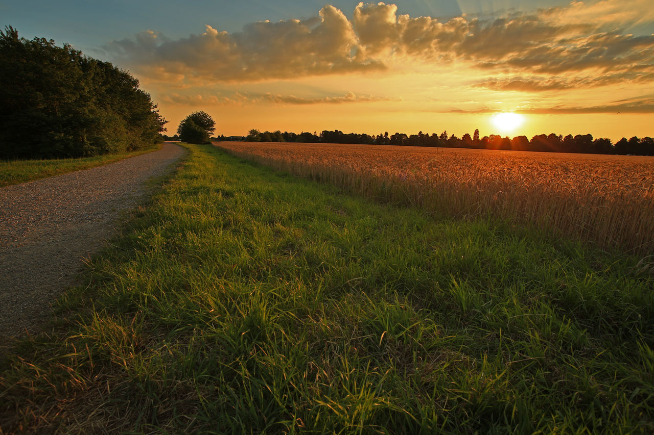 Beauty In Nature Cereal Field Cereal Plant Evening Light Evening Sky Evening Sun EyeEmNewHere Growth Landscape Light Nature Outdoors Sunset Sunset_collection Wheat Wheat Field Wheat Plant