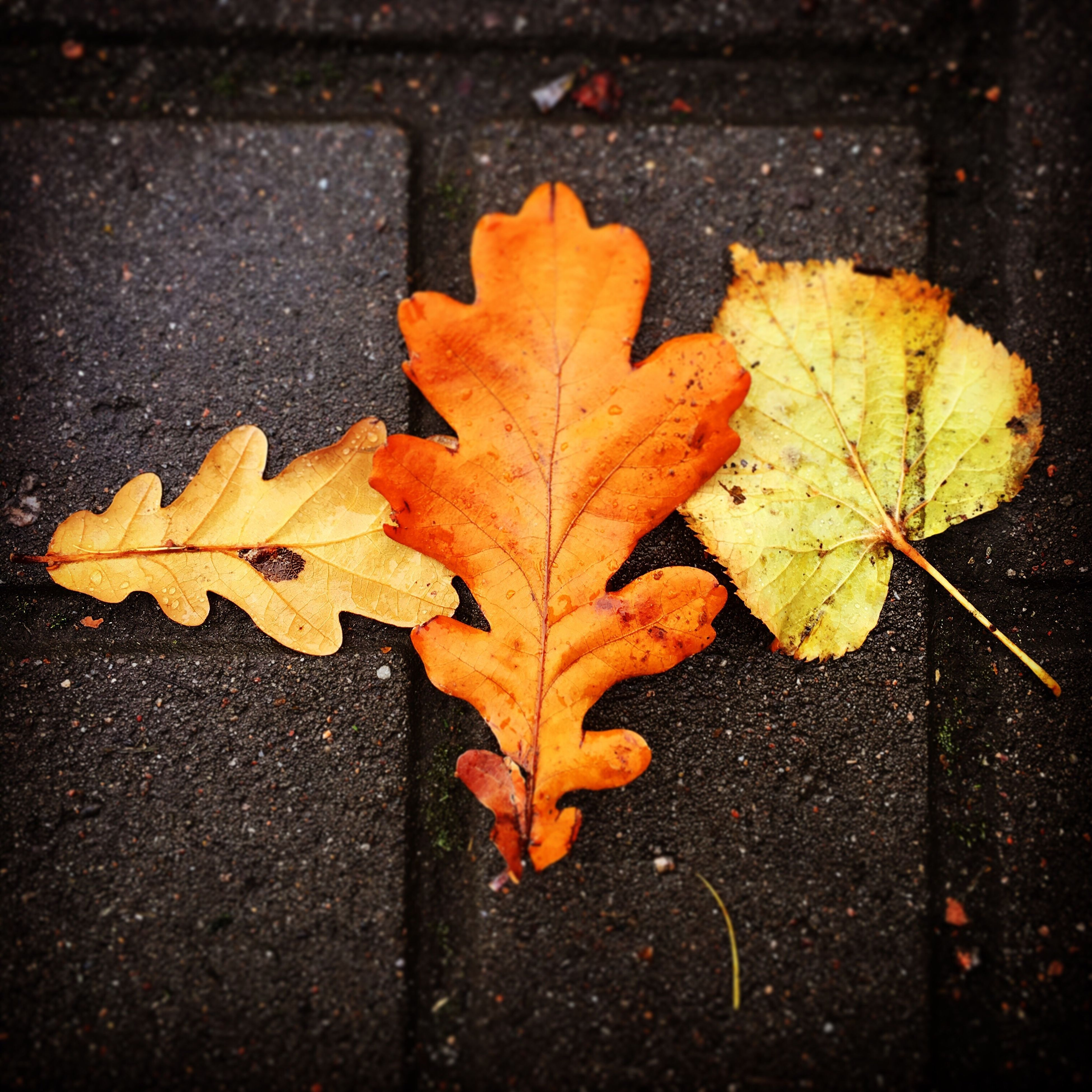 leaf, autumn, change, season, dry, maple leaf, close-up, orange color, street, road, natural condition, tranquility, nature, day, fragility, beauty in nature, scenics, no people, dried plant, vibrant color, yellow color