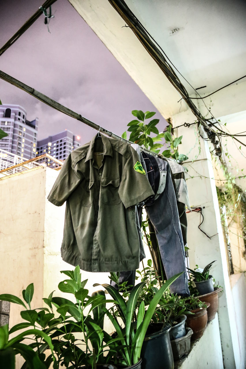 hanging, clothesline, drying, architecture, plant, built structure, building exterior, outdoors, growth, day, no people, low angle view, leaf