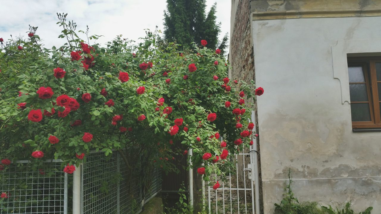 Red Flowers Growing On Tree