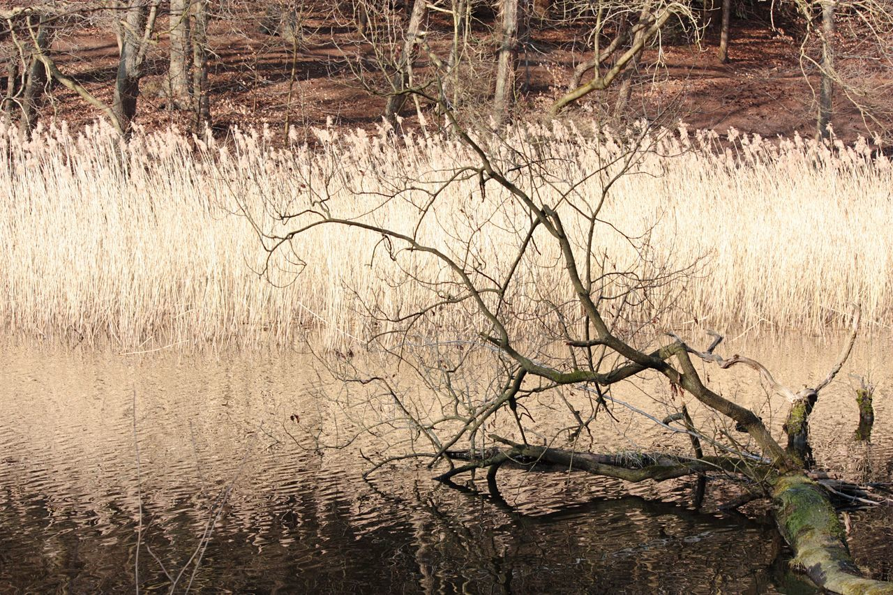 Fallen Tree Against Reed At Lake