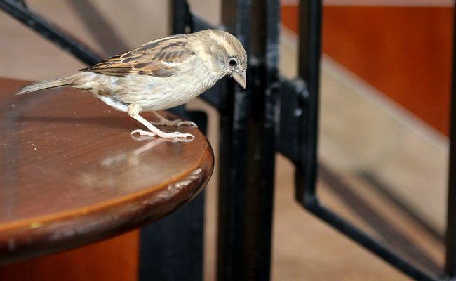 Urban Birds Birds Of EyeEm  EyeEm Birds