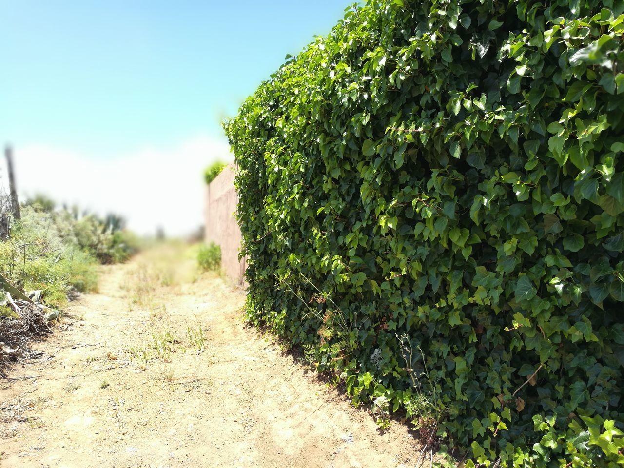 Plant Green Color Landscape Agriculture Rural Scene