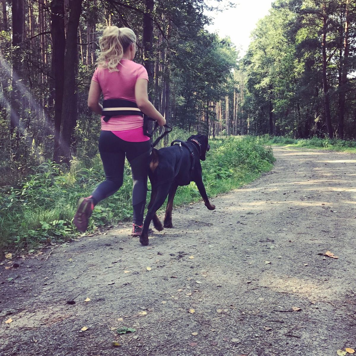 Canicross Dog Running Working Out Animal Themes Jogging Sport Full Length Rear View Real People Lifestyles Pets Doberman  Young Women Healthy Lifestyle Activity One Person Day Forest Tree Outdoors Working Animal