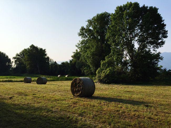 Landscape Field Fieldscape