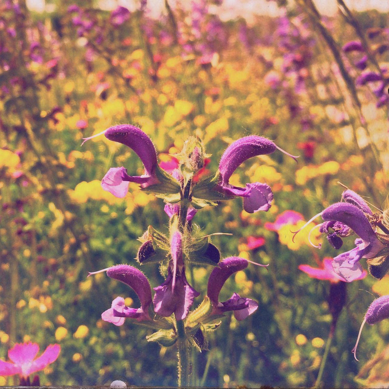 Flower Flowers Violet Violet Flowers Glattalbahn Trasse Hipstamatic Spring Spring Flowers IPhone 5S