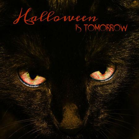 Animal Themes Black Background Black Cat Photography Close-up Familiar Halloween Ilovehalloween Night No People One Animal Pets