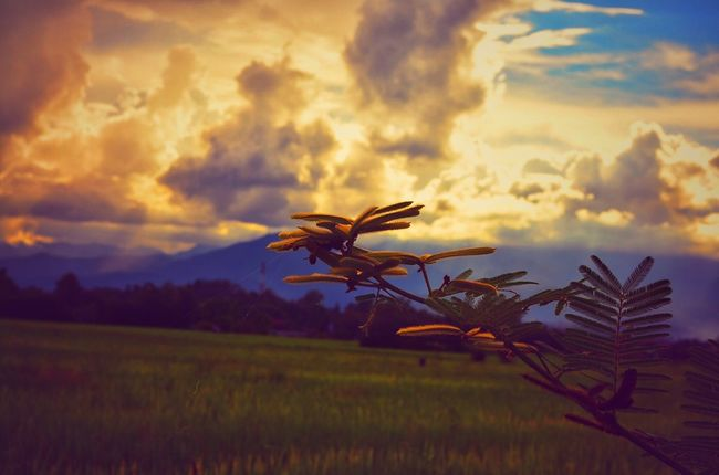 Atmospheric Mood Beauty In Nature Cloud Cloud - Sky Cloudy Countryside Dramatic Sky Field Grassy Growth Landscape Majestic Nature No People Non-urban Scene Outdoors Plant Remote Scenics Sky Solitude Storm Cloud Sunset Tranquil Scene Tranquility