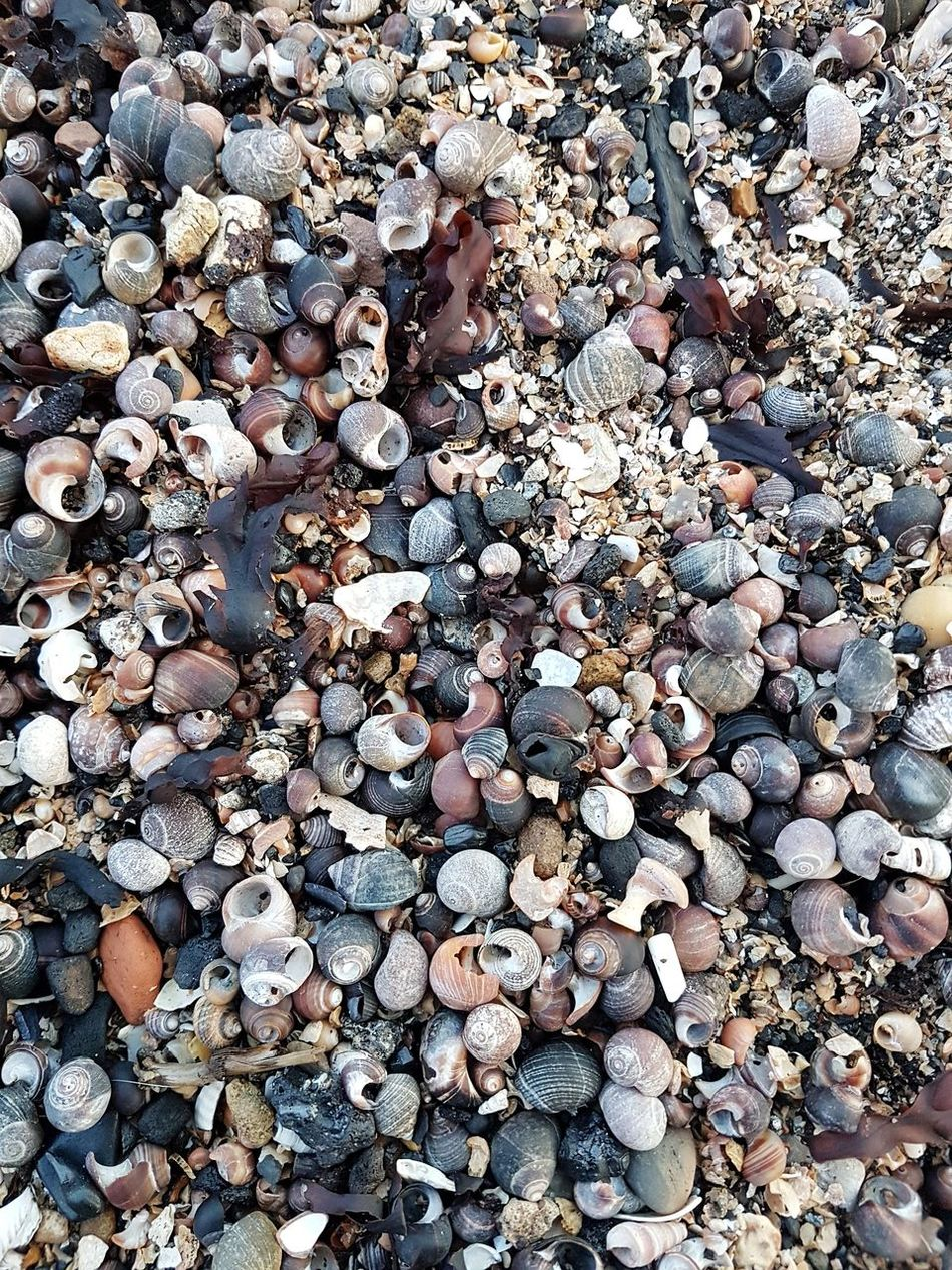 Abundance Full Frame Large Group Of Objects Backgrounds Day Pebble Beach Outdoors High Angle View No People Nature Pebble Beach Close-up Shells Shell Beach Shell Photography Beachphotography Beach Walk Beachlife S7 Edge Photography S7Edgecamera Taking Photos Check This Out