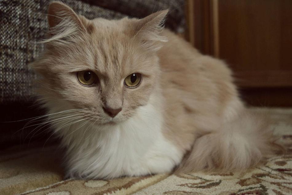 Animal Cat Pet