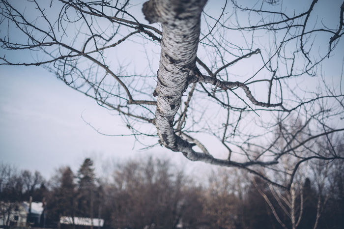 Angled Bare Tree Branches Cold Cold Temperature Forest Houses Low Perspective Nature Outdoors Tree Winter