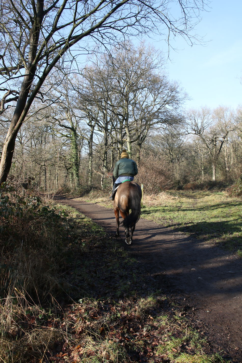Animals In The Wild Beauty In Nature Bookham Bridleway Day Field Growth Horse Horse Riding Nature Outdoors Rider Sky Sun Surrey Countryside Tranquility Tree