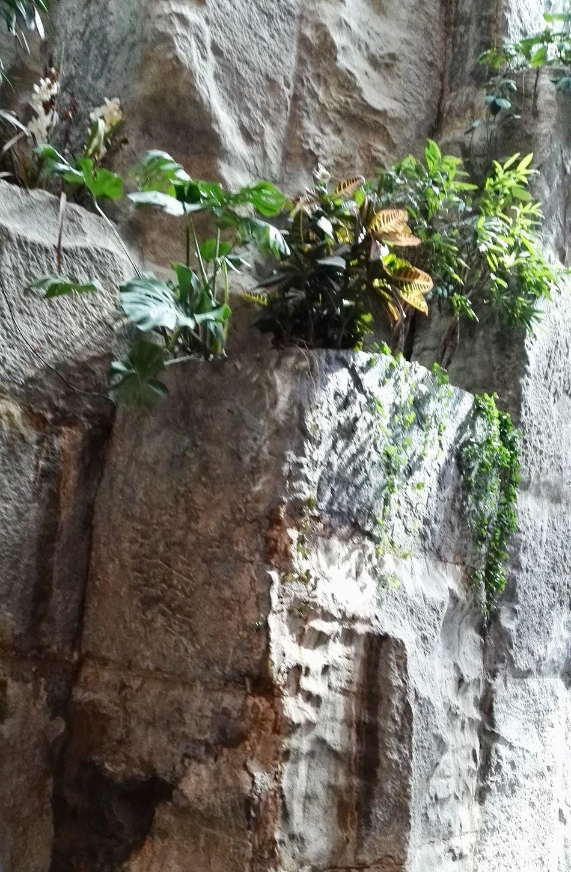 Plant Plants Plants 🌱 Rock - Object Simplicity Art Architecture Green Nature Beautiful Town Geometric Shape Geometric Shapes Geometric Architecture Geometry ArtWork Simmetrical Building