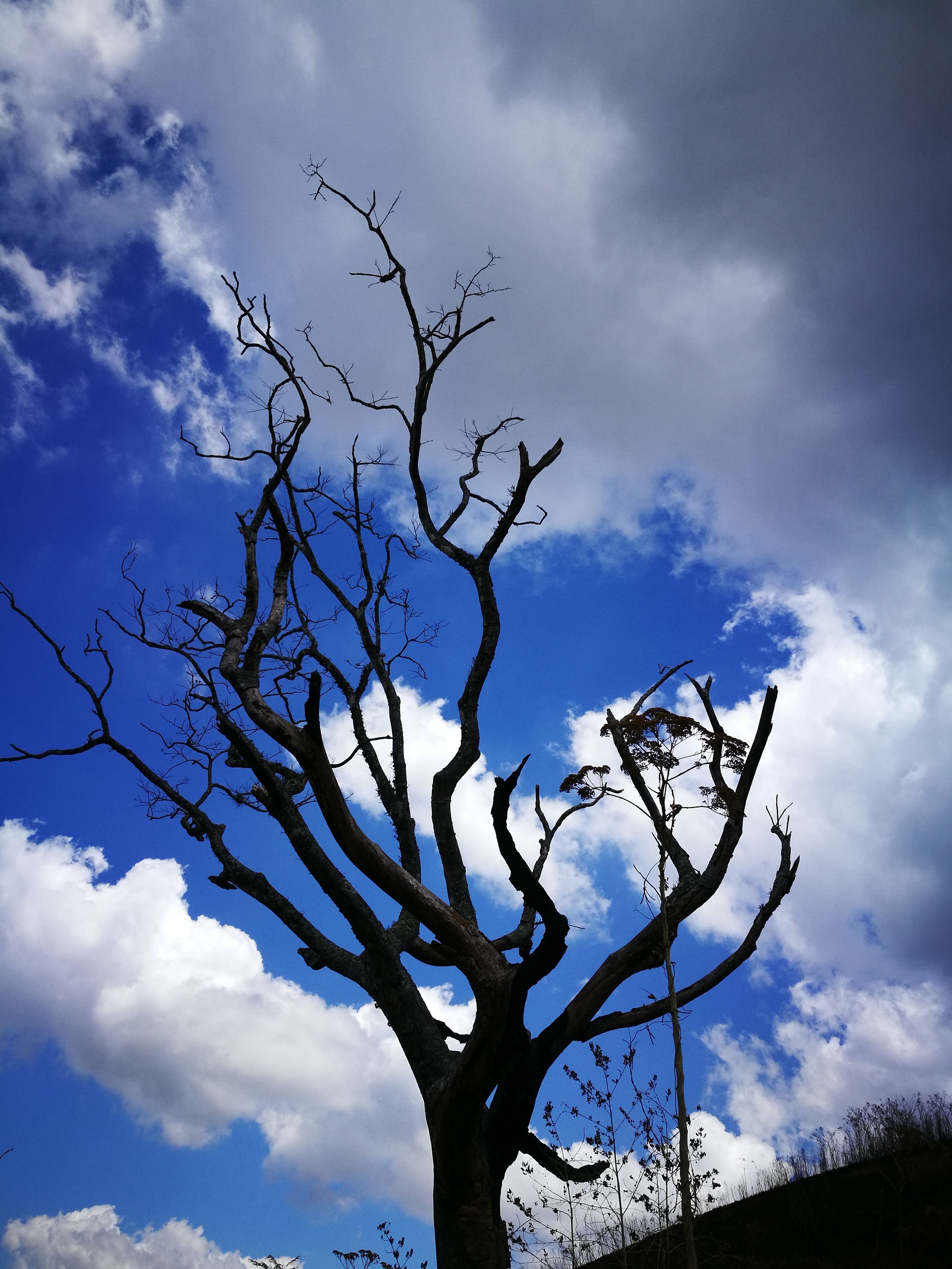 cloud - sky, sky, low angle view, tree, branch, bare tree, no people, nature, outdoors, beauty in nature, day, treetop