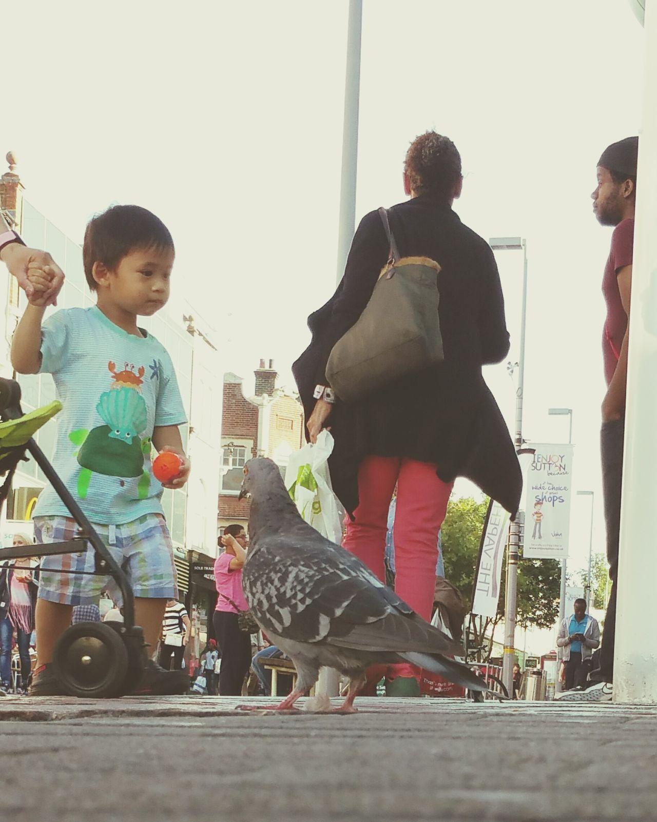 Streetlevel Street Photography Pidgeon