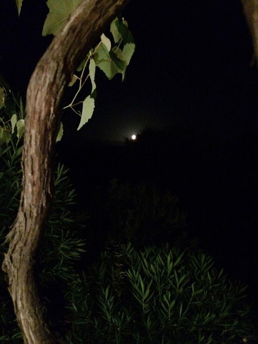 Hello World Check This Out Enjoying Life Nuit Noire Pleine Lune Vignoble Corse