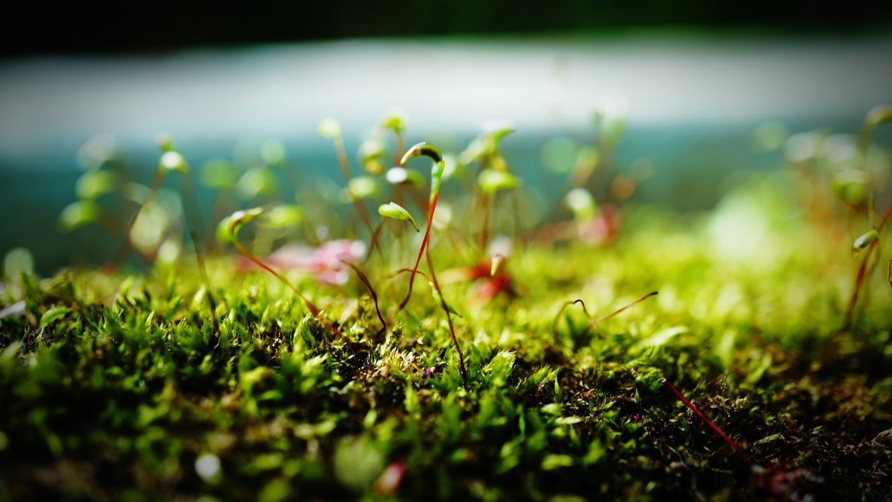 Osaka, Japan Nature Grass No People Growth Outdoors Social Issues Plant Day Beauty In Nature Water Close-up Freshness Moss 箕面