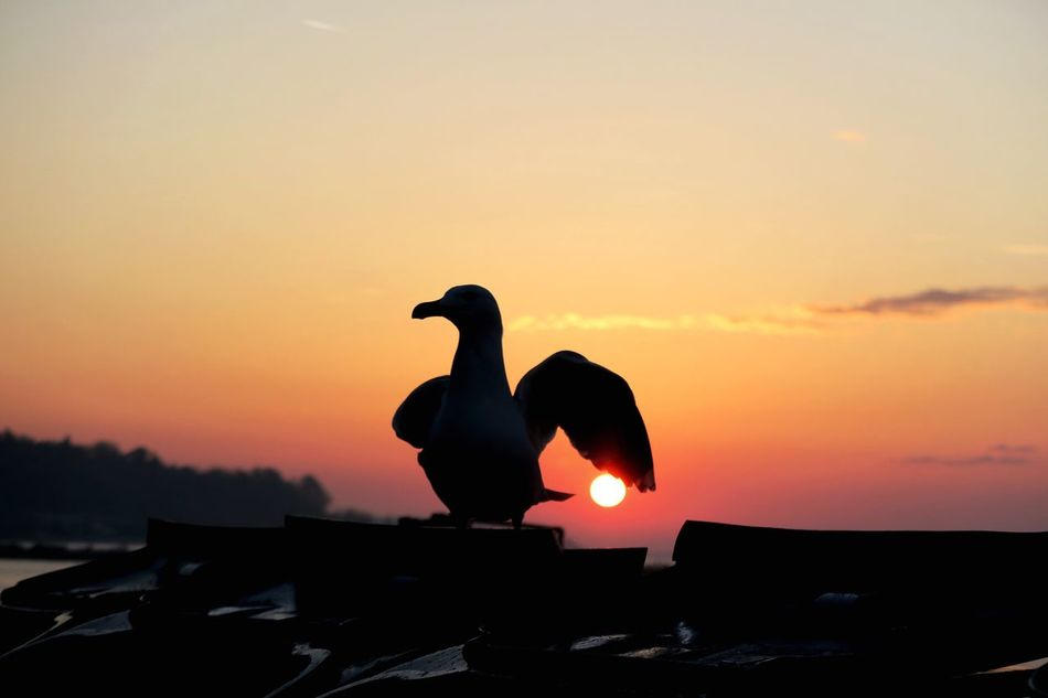 Bird Sunrise Bird Outdoors Sun No People Varna,Bulgaria One Animal Long Goodbye