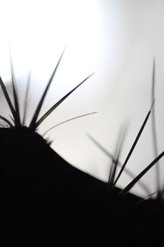Beuty Of Nature Cactus Greenflower Macro Photography Night Nopal Splinter Spring
