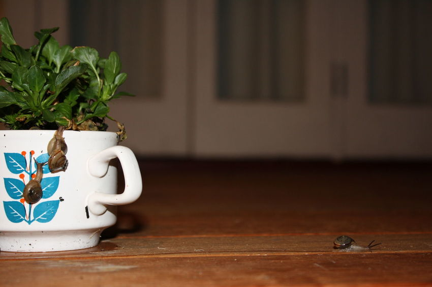 Garden Nature No People Pests Agriculture Plant Runaway Snail TeaCup
